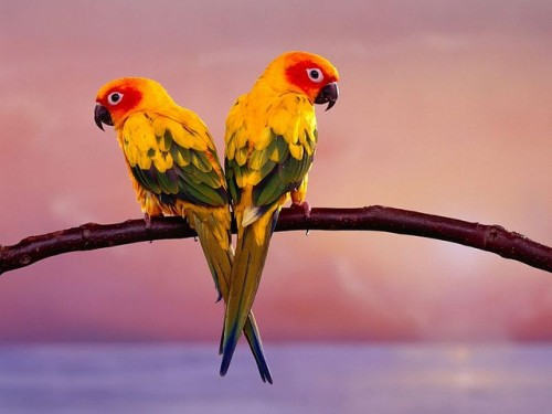 Wallpapers parrot by Foto Kita