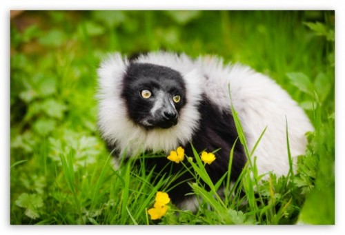 Ruffed Lemur Habitat Wallpaper